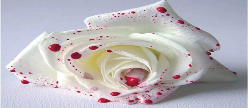 На свадьбе убийство